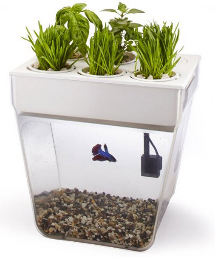 fish plant